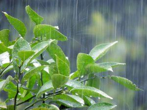 梅雨の葉っぱ